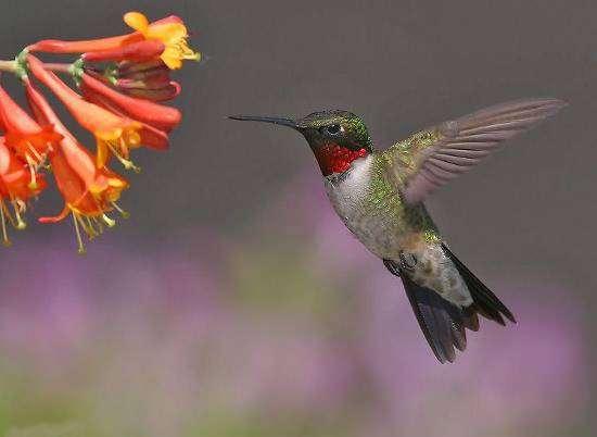 Google Hummingbird - новий алгоритм ранжування