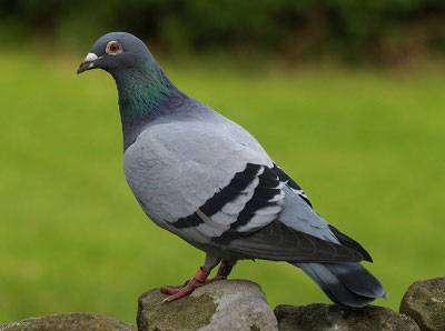 Веб-дизайн і цільова аудиторія: що за птахи ваші потенційні клієнти?