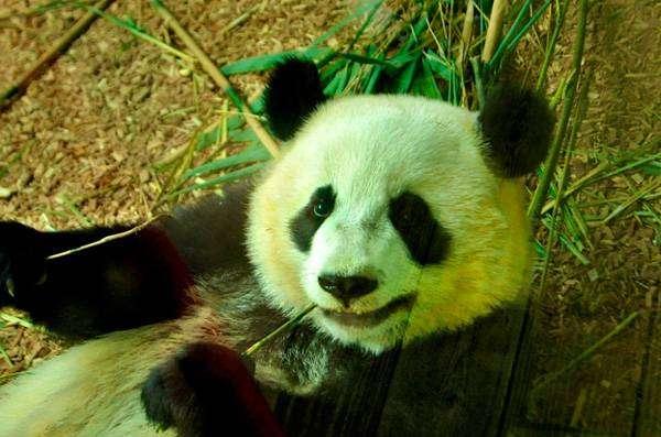Як Panda 4.1 вплине на вашу контент-стратегію